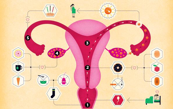 anatomija vagine