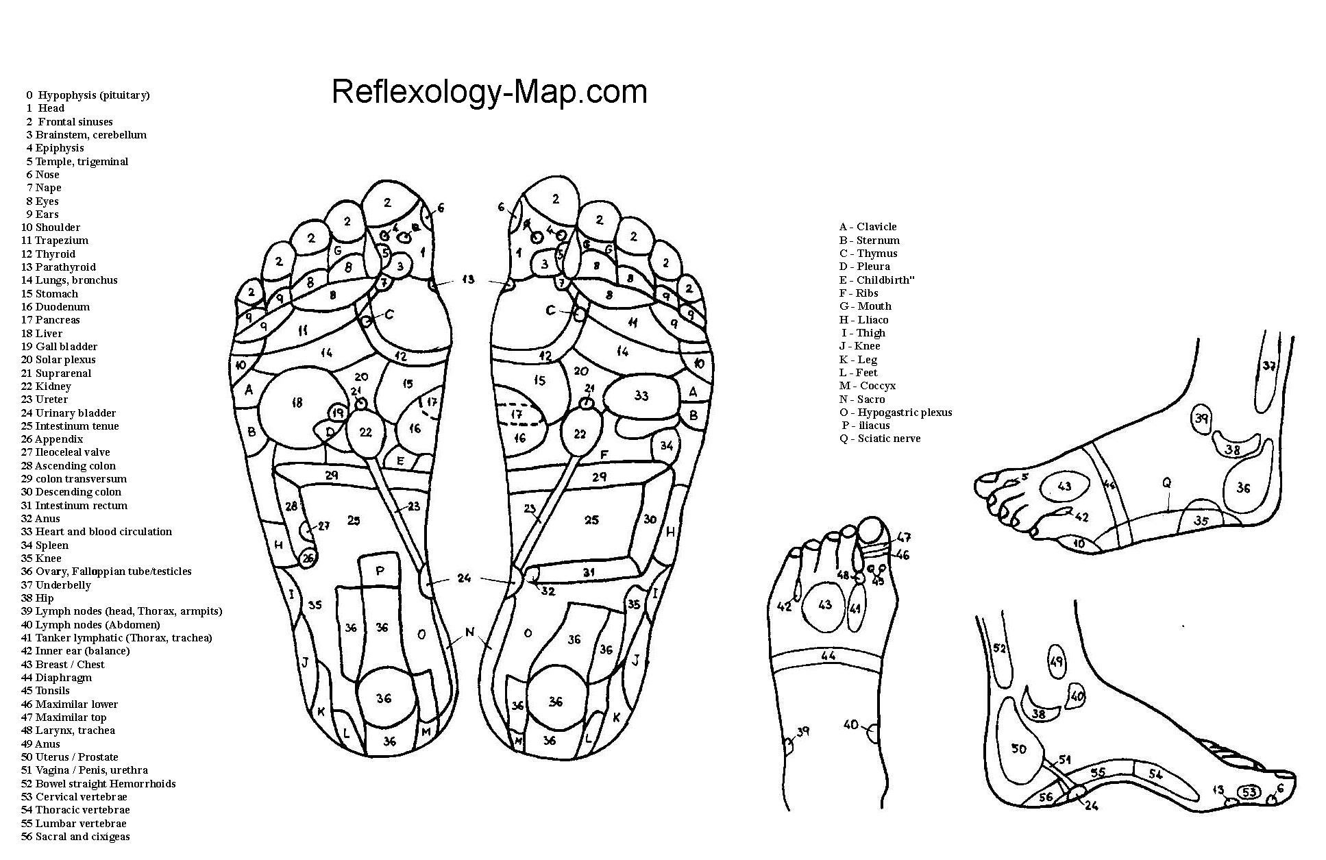 Feet-Reflexology-Map