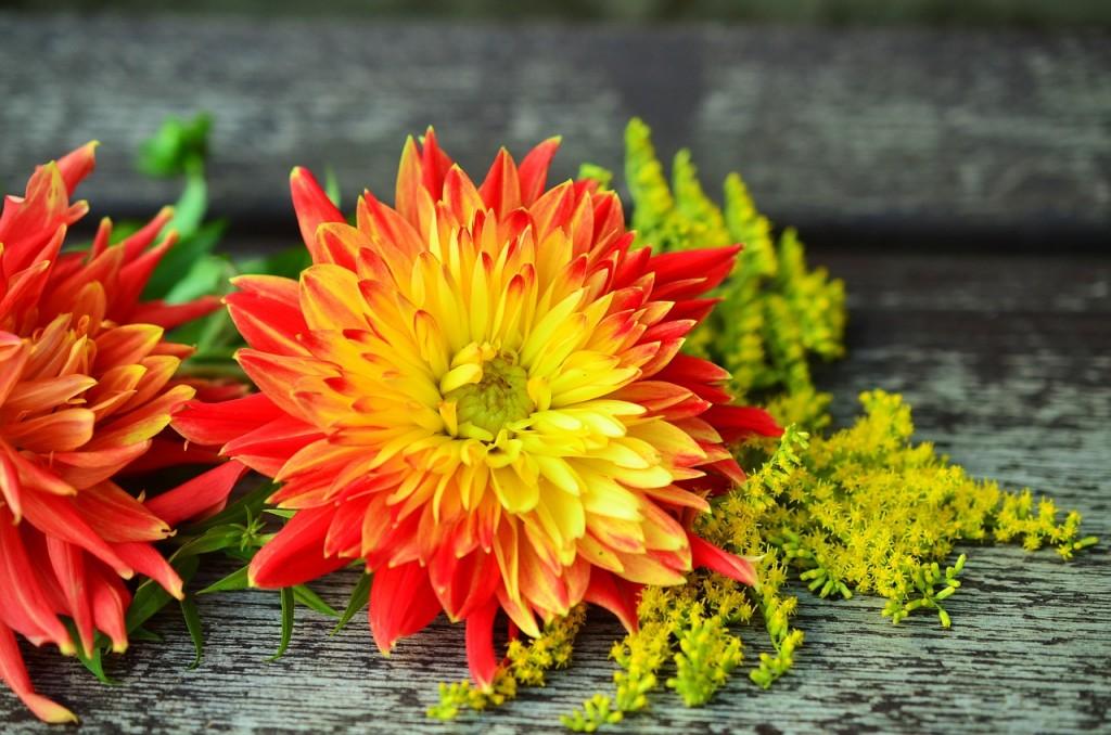 flowers-931630_1280