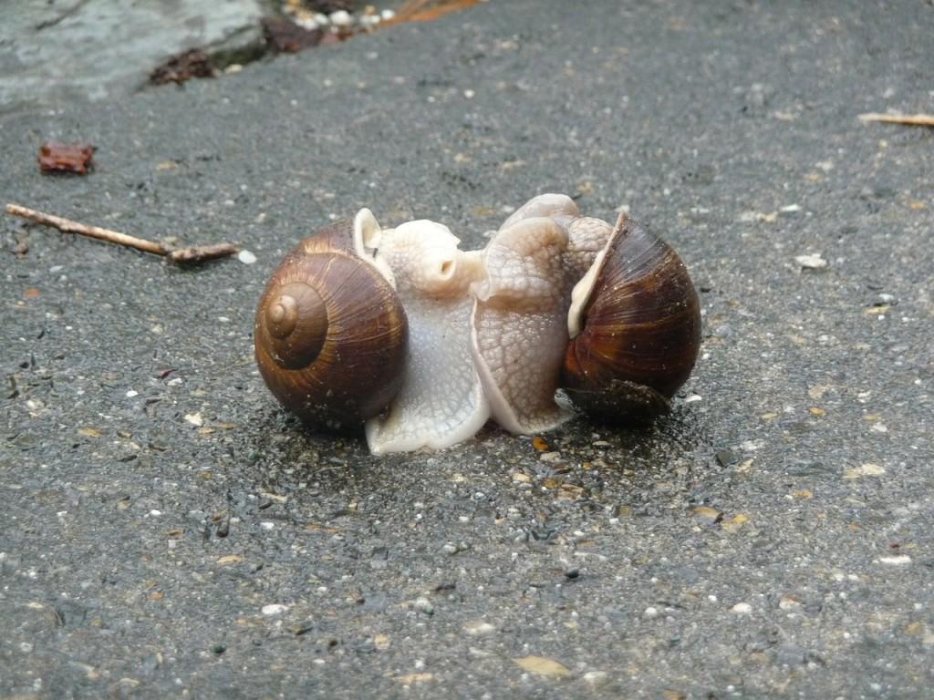 escargots-243303_1280