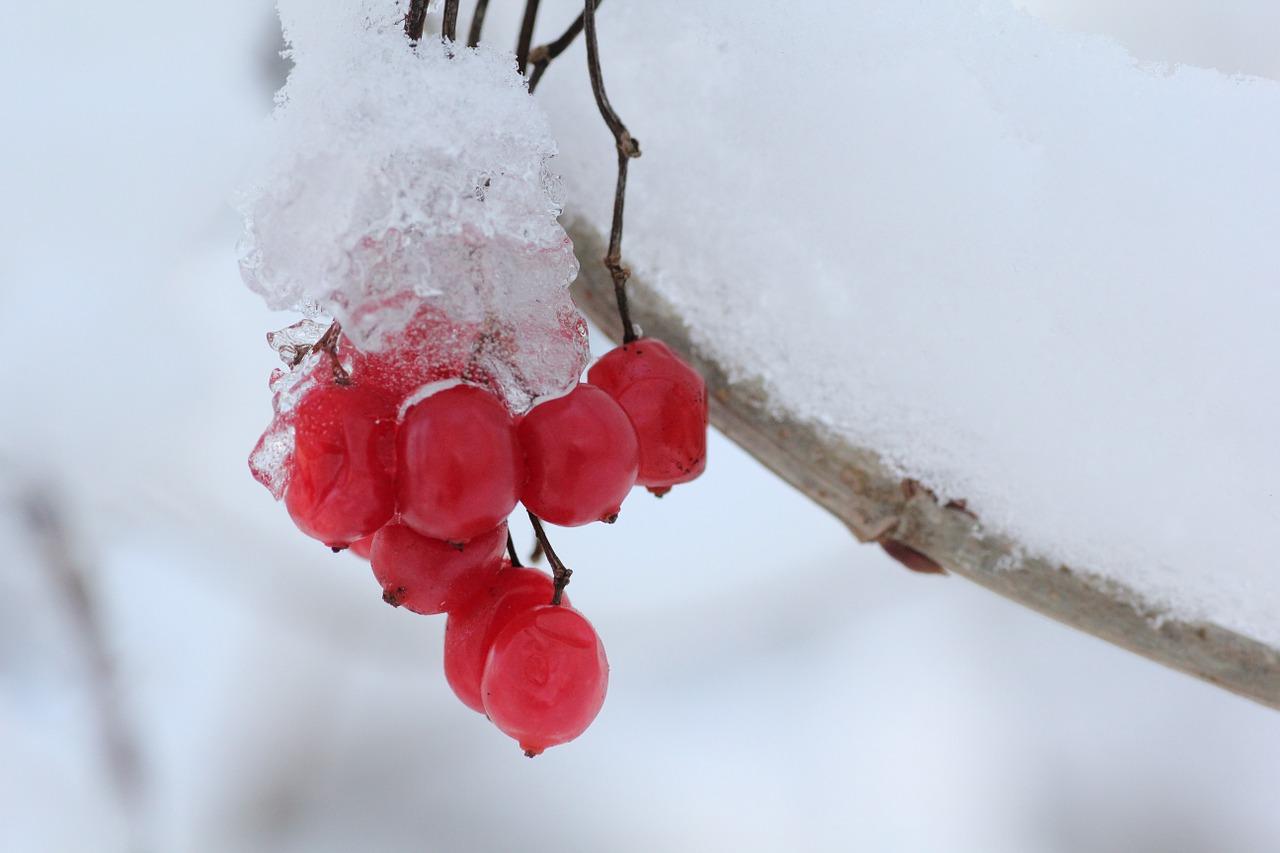 ice-606864_1280