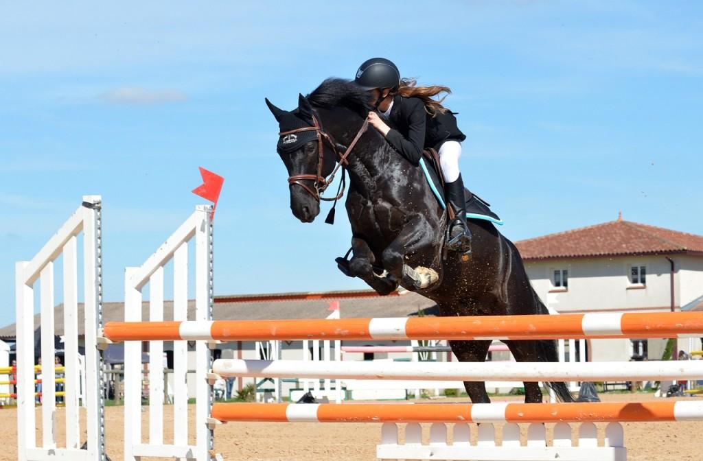 horse-721136_1280