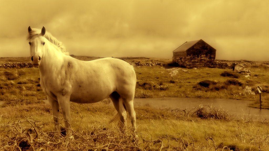 horse-928213_1280