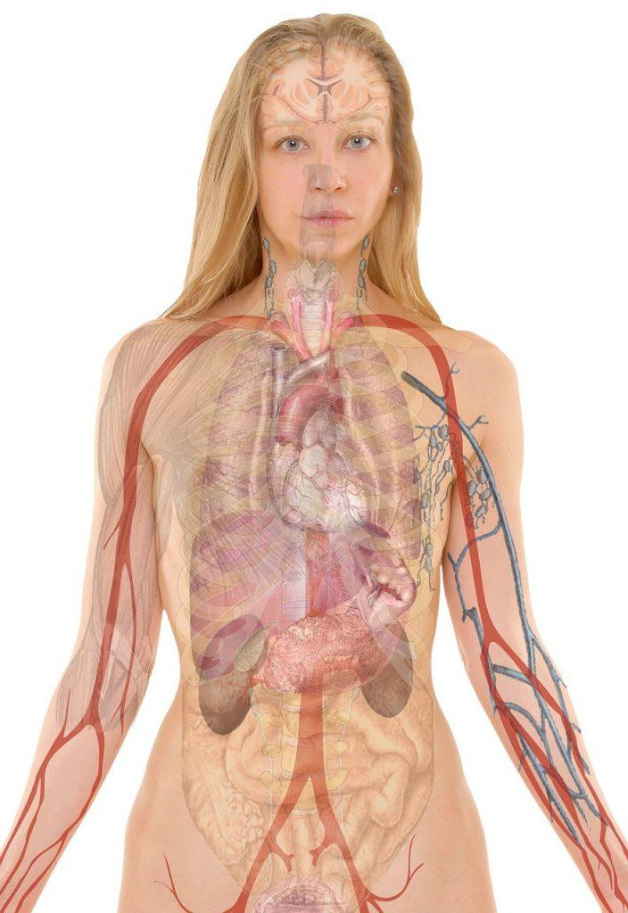 anatomy-254120_1280 (1)