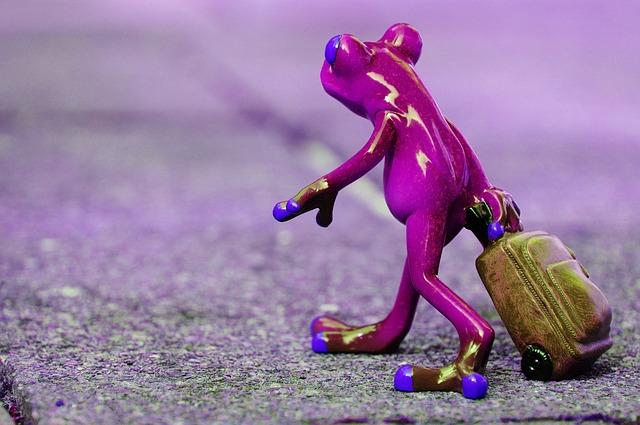 frog-1254647_640