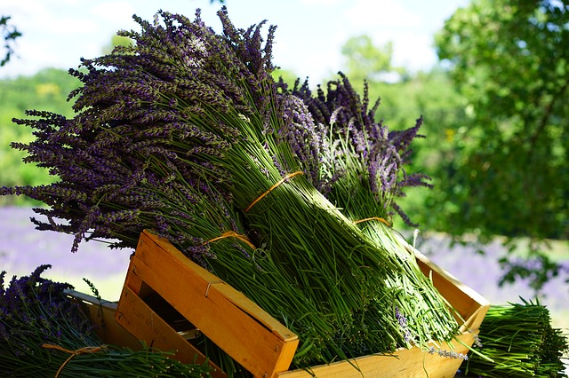 lavender-1595608_640